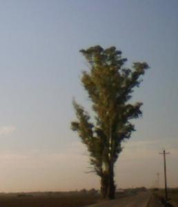 tree_dog_cat